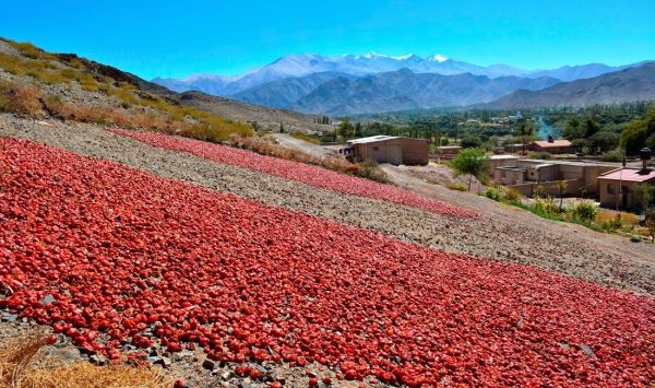 Mantos de pimientos rojos bajo el sol • Cachi, Salta - Argentina