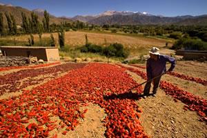 Hostal de las Tinajas - Cachi: Mantos de pimientos rojos bajo el sol