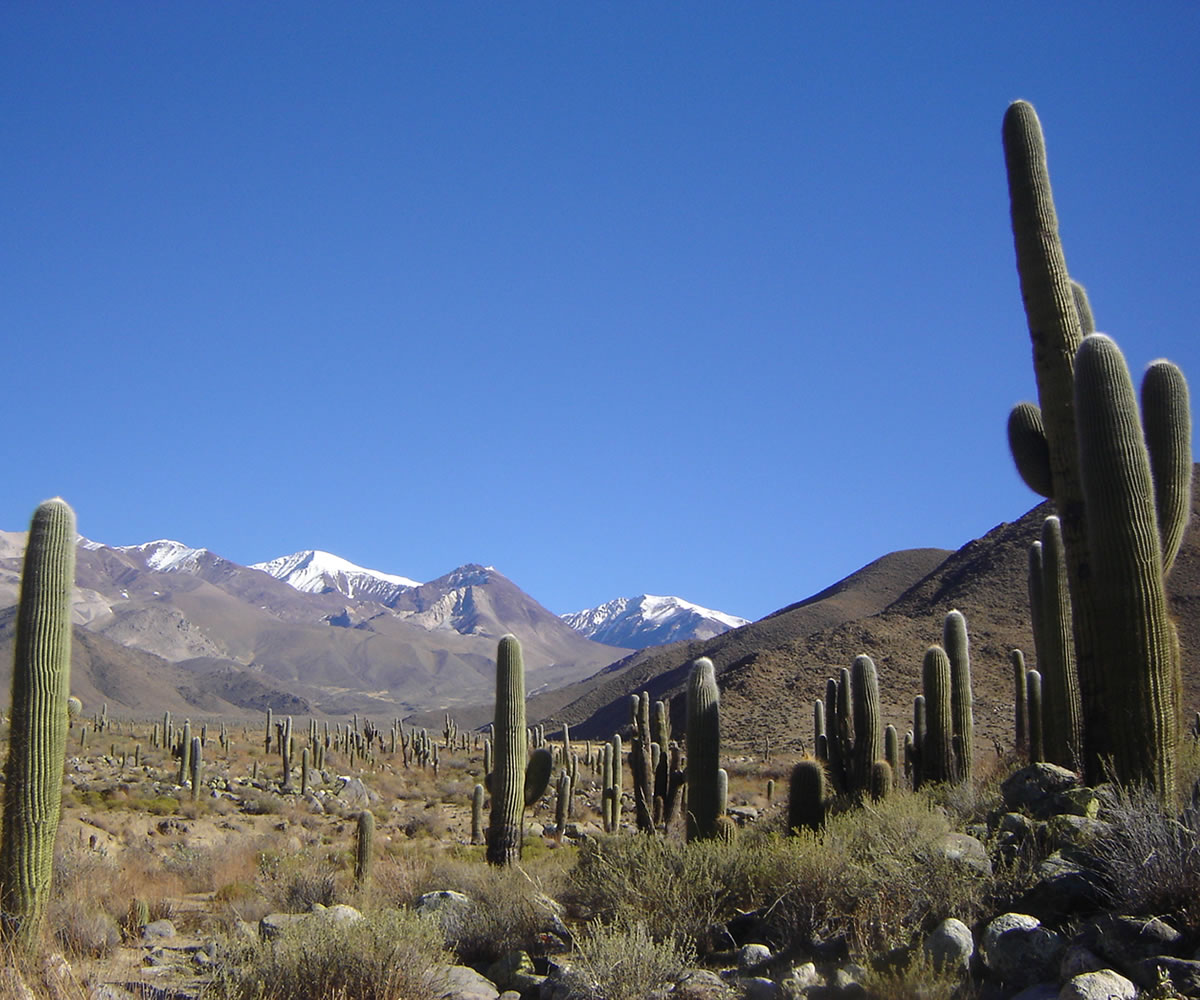 Sitio Arqueológicos: El Tero, Las Pailas, El Algarrobal, Puerta La Paya - Cachi, Salta