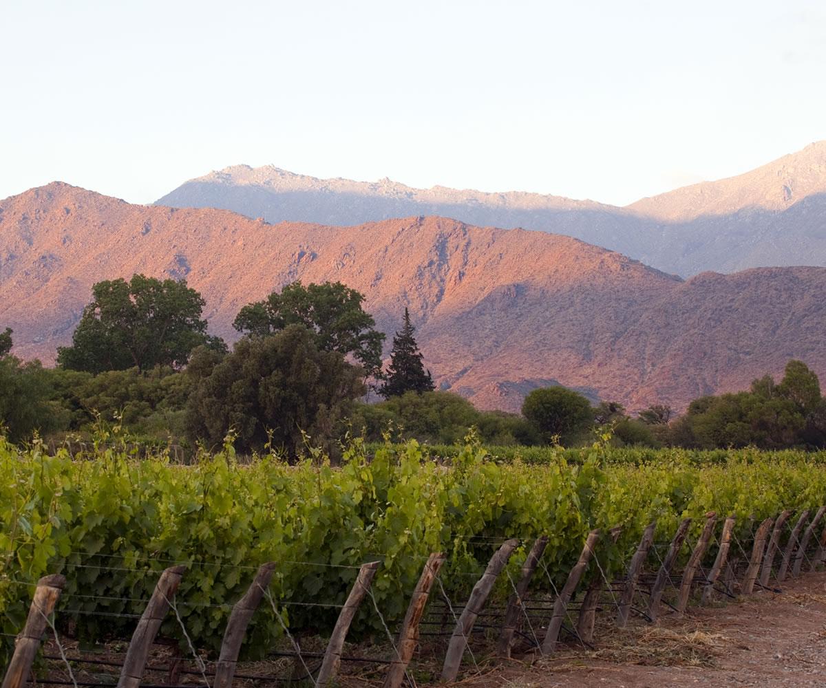 Ruta del vino - Cachi, Salta